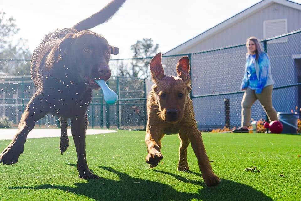 Dogs running on artificial grass