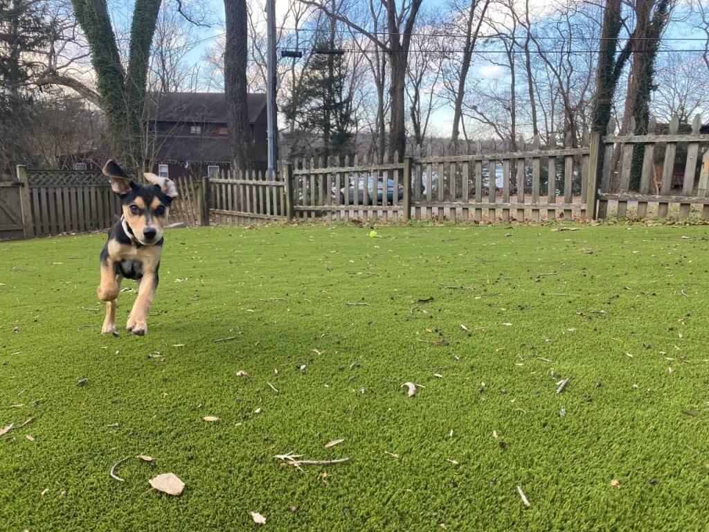 Fake Dog Grass